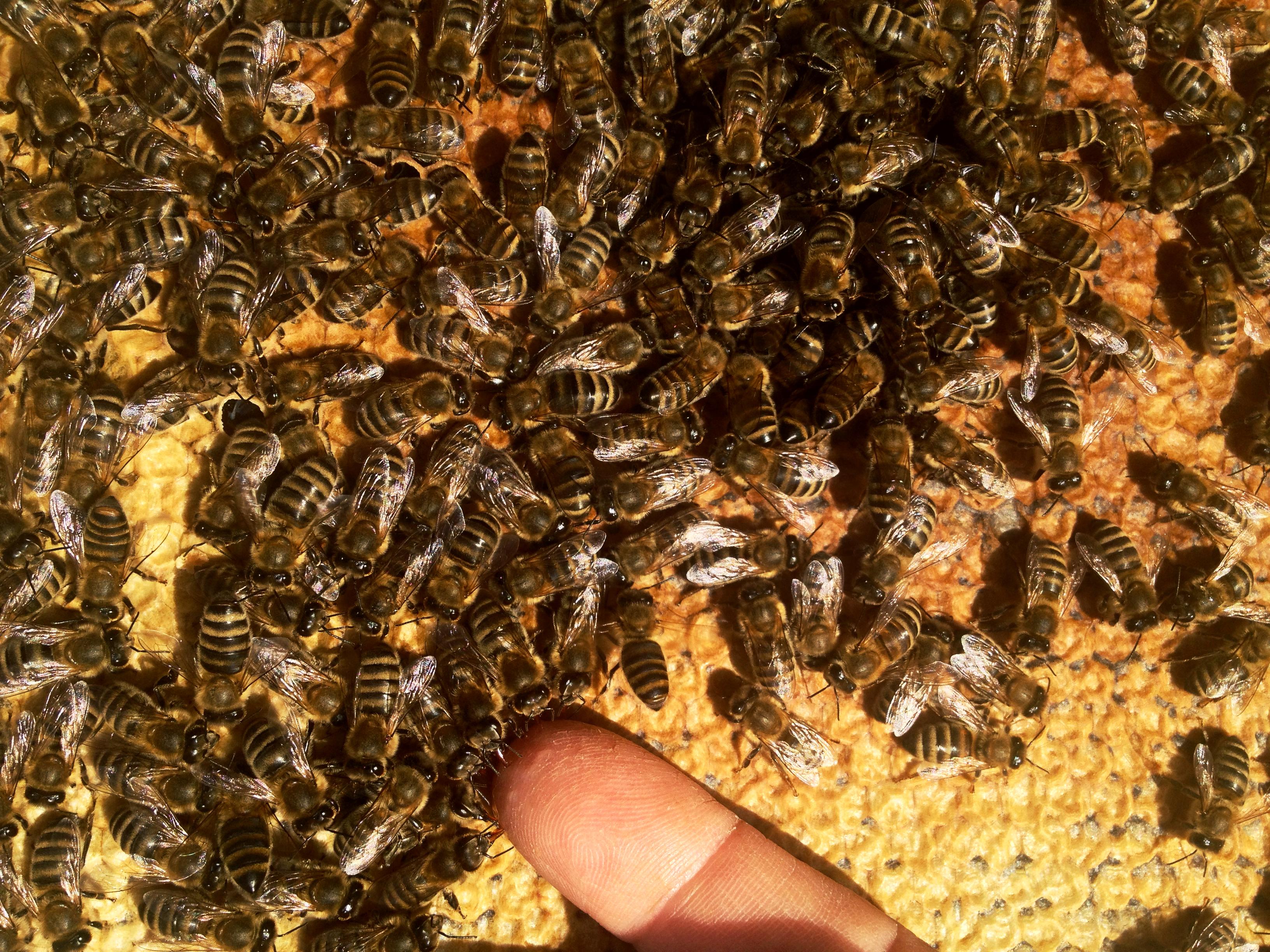 hur gör man honung